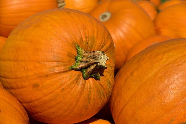 Výsadba dýně: kultivace, péče a sklizeň